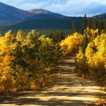 ASK EARTHA: What To Do With Fallen Leaves